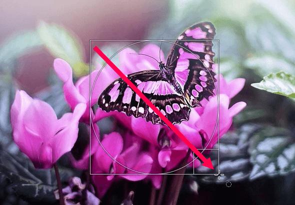 Make a circular selection in GIMP